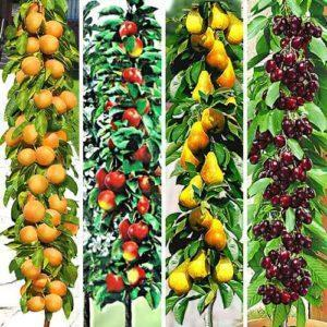 Плодовые деревья: что нужно знать о приобретении?