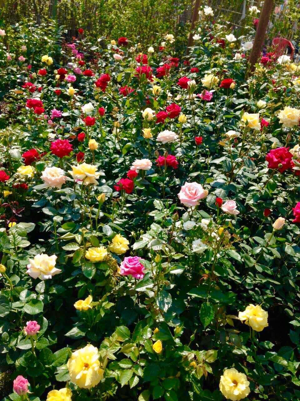 питомник рассады цветов в москве и подмосковье